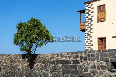 wall with a tree at the