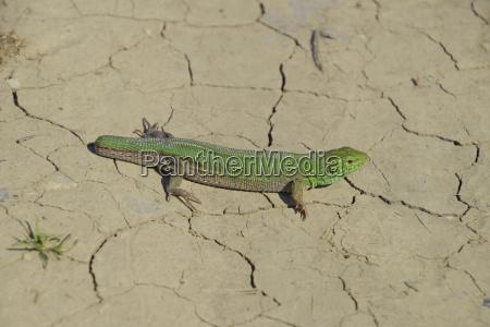 einzel geschuetzt farbe closeup nahaufnahme tier