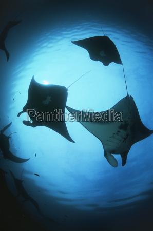 indonesien sonnenlicht unterwasser outdoor freiluft freiluftaktivitaet