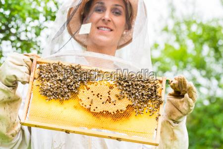 imker der beeyard und bienen kontrolliert