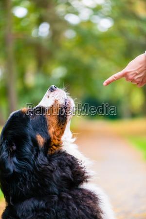 frauentraining mit hund sitzen befehl