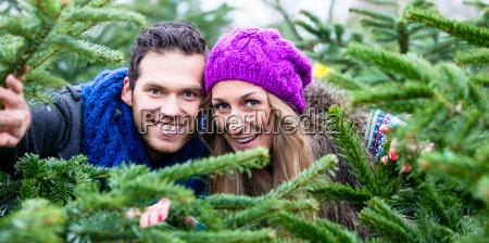 paar spass beim weihnachtsbaum verkauf
