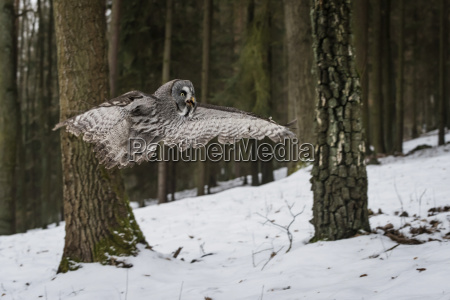 tier vogel outdoor freiluft freiluftaktivitaet im