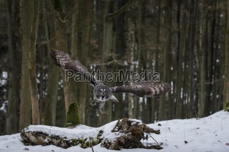 winter tier vogel outdoor freiluft freiluftaktivitaet
