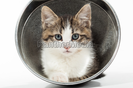 young kitten sitting in reflector