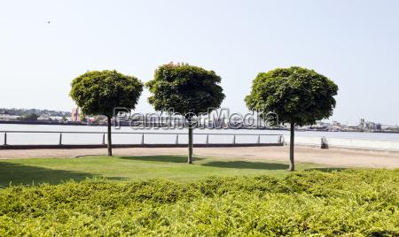 blatt baumblatt stadt baum baeume park