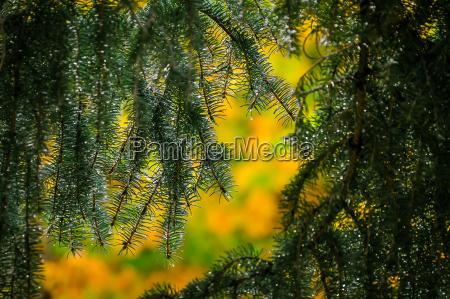 baum botanik ast zweig outdoor freiluft