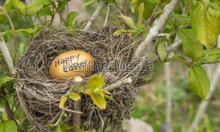 bird nest with a golden egg