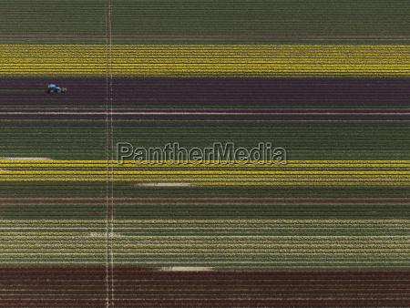 aerial view of various crops in
