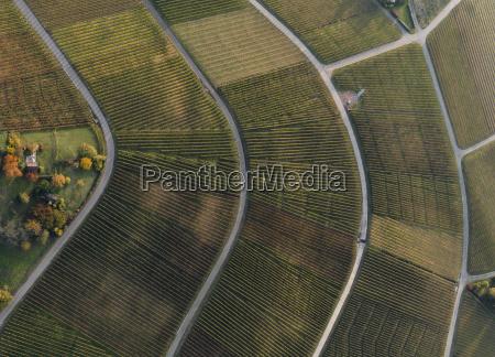 full frame shot of vineyards in