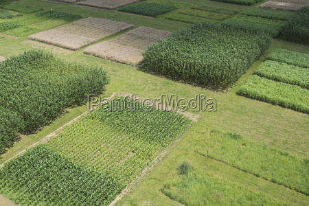 high angle view of agricultural field
