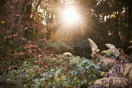 sun shining through baeume im herbst