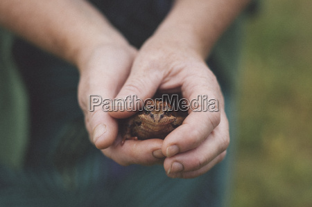 close up of hands holding frog