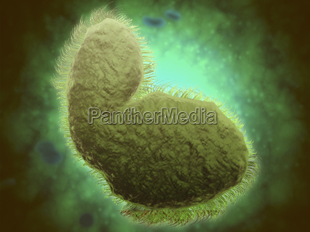microscopic view of respiratory syncytial virus