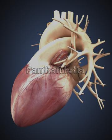 medizinisches medizinischer medizinische medizinisch illustration ventil
