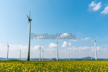 wind farm in a blooming rape