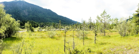 vegetation im isarwinkel