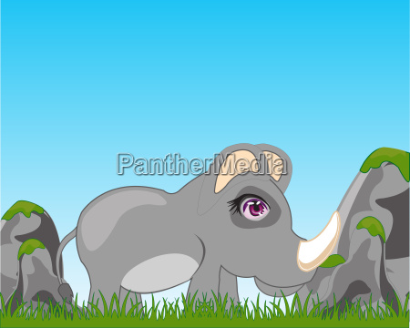 rhinoceros auf dery