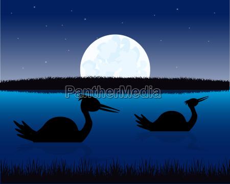 nachtlandschaft mit wasser und vogel