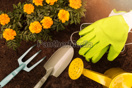 gardening tools and marigold flowers on
