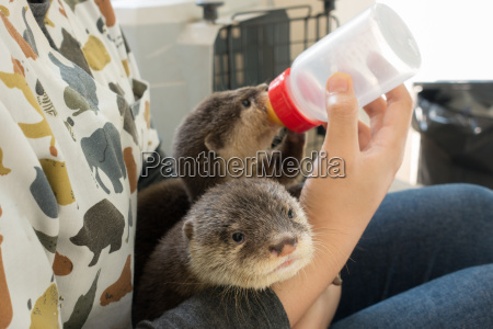 zookeeper fuetterung babyotter