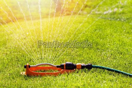 rasen sprinkler spaying wasser ueber gruene