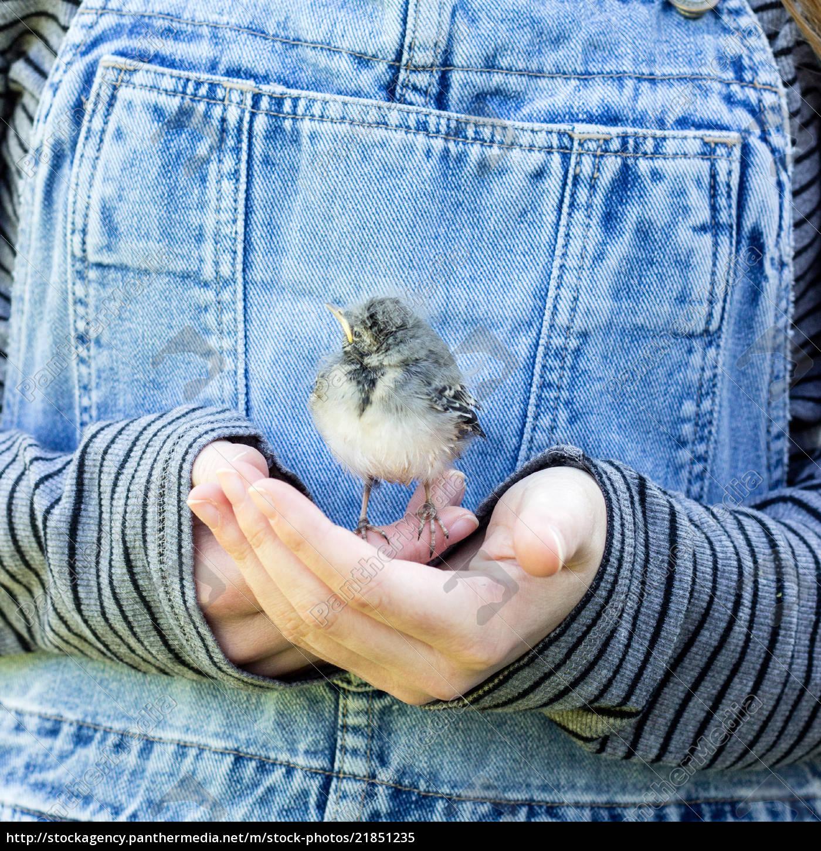 ein, mädchen, mit, einem, jungen, singvogel - 21851235