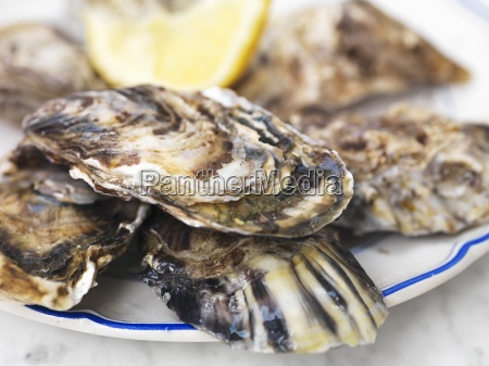 fresh oysters with lemon close up