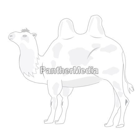 drawing of the camel on white