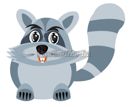 drawing of the racoon on white