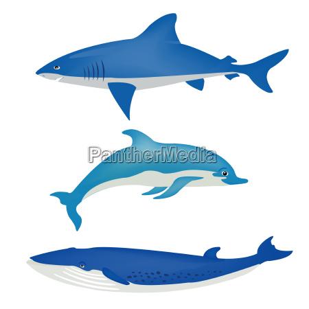 blau saeugetier tiere fisch delphin illustration