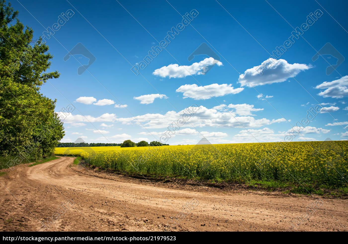 schotterstraße, im, blühenden, feld, schöne, landschaft, sonniger, tag - 21979523