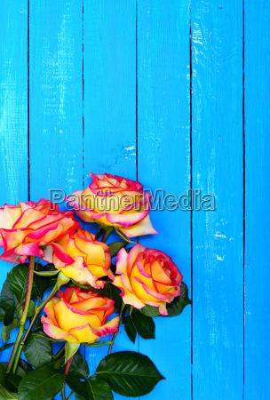 strauss gelbe rosen auf einem blauen