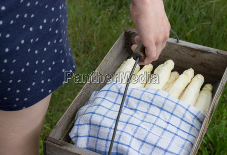 girl holding a basket with white