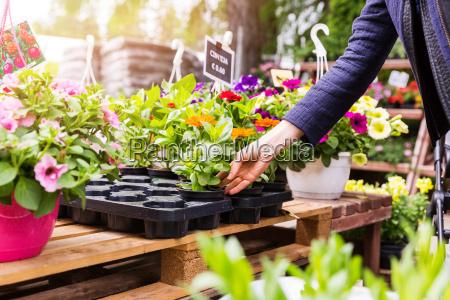 woman chooses flower pots at garden