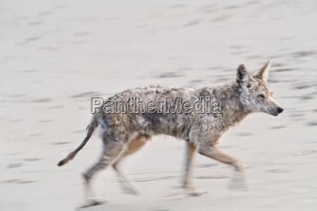 tier saeugetier strand usa horizontal hund