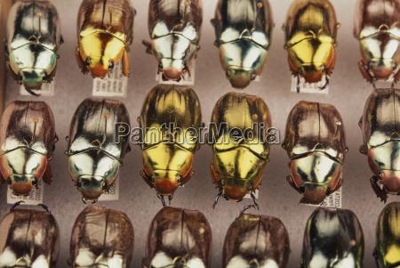 abmachung wissenschaft tier insekt kaefer horizontal