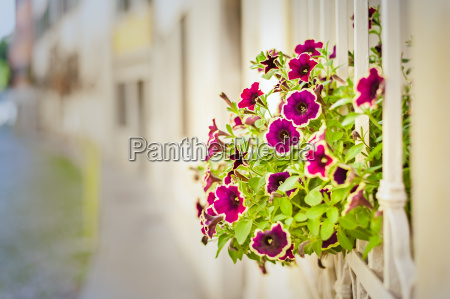 beautiful flowers in a window garden