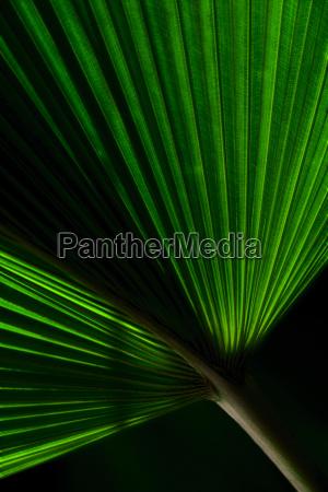 close up of palm leaf