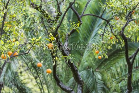 close up of fruit tree