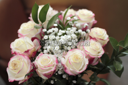 white roses with red highlights closeup