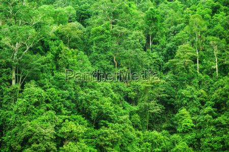 tropische regenwaldlandschaftsansicht