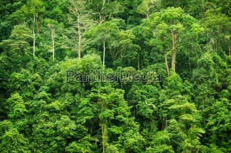 tropische gruene waldlandschaftsansicht