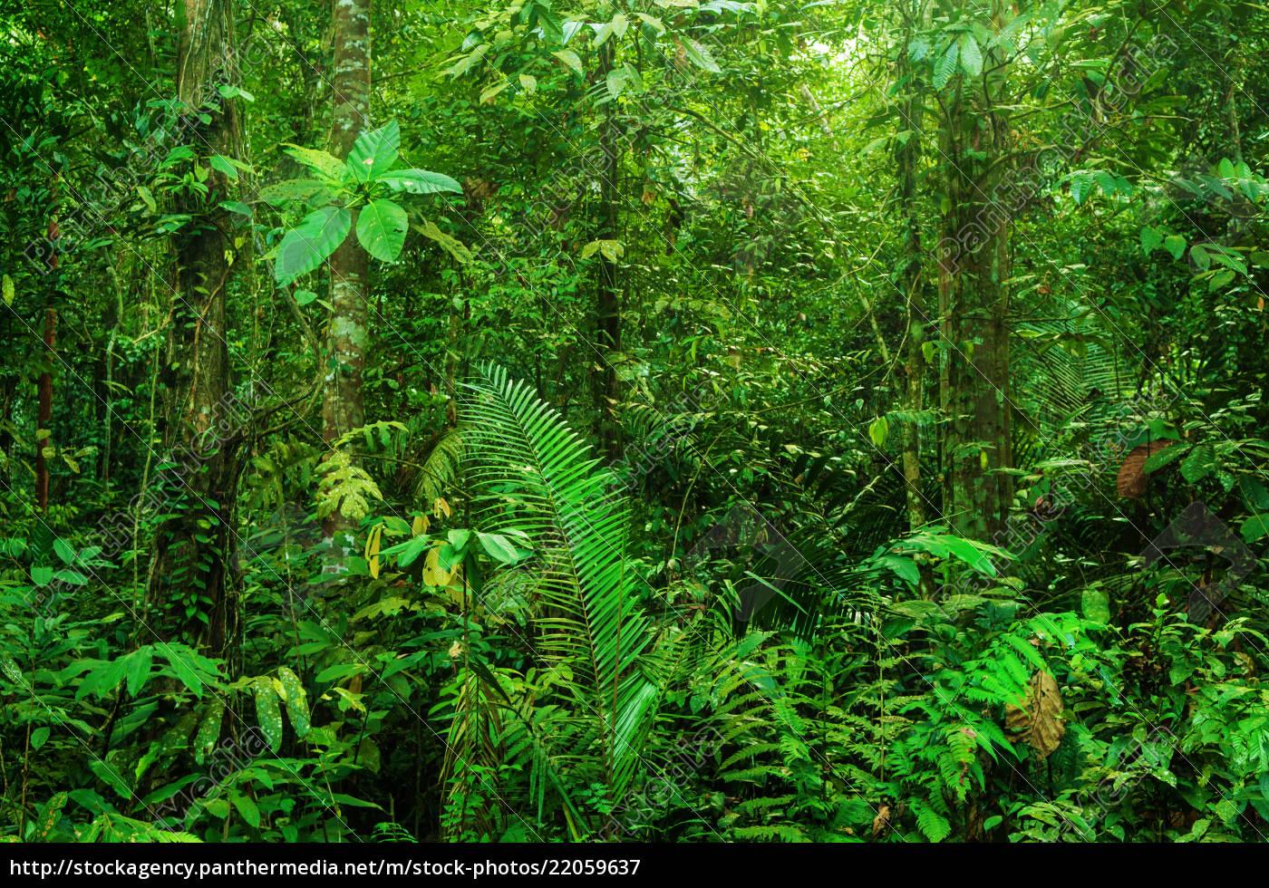fantastischer, tropischer, regenwald - 22059637