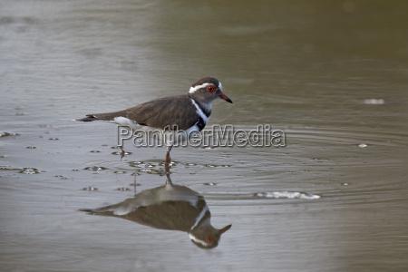 fahrt reisen farbe vogel afrika reflexion