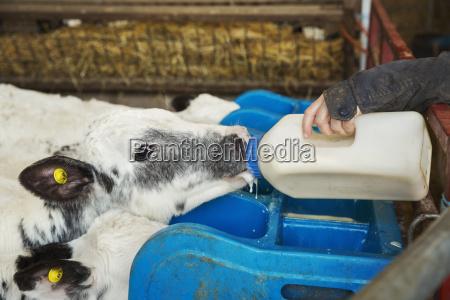 essen nahrungsmittel lebensmittel nahrung tier saeugetier