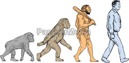 menschliche evolution walking zeichnung