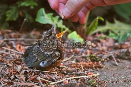 junges baby vogel gefuettert