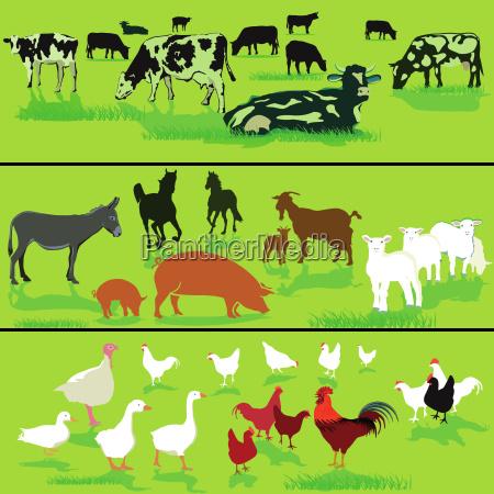 farm animals on the meadow