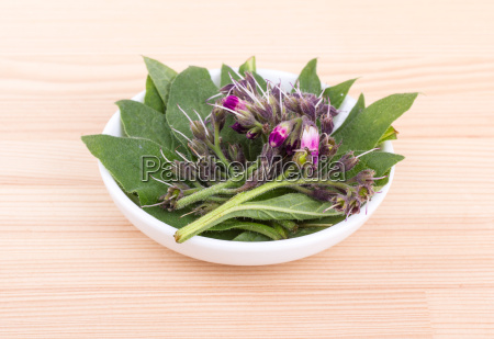 fresh comfrey leaves and